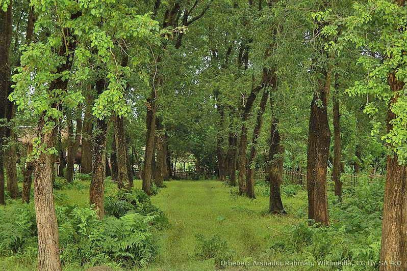 Majuli gilt als grüne und sehr pflanzenreiche Insel